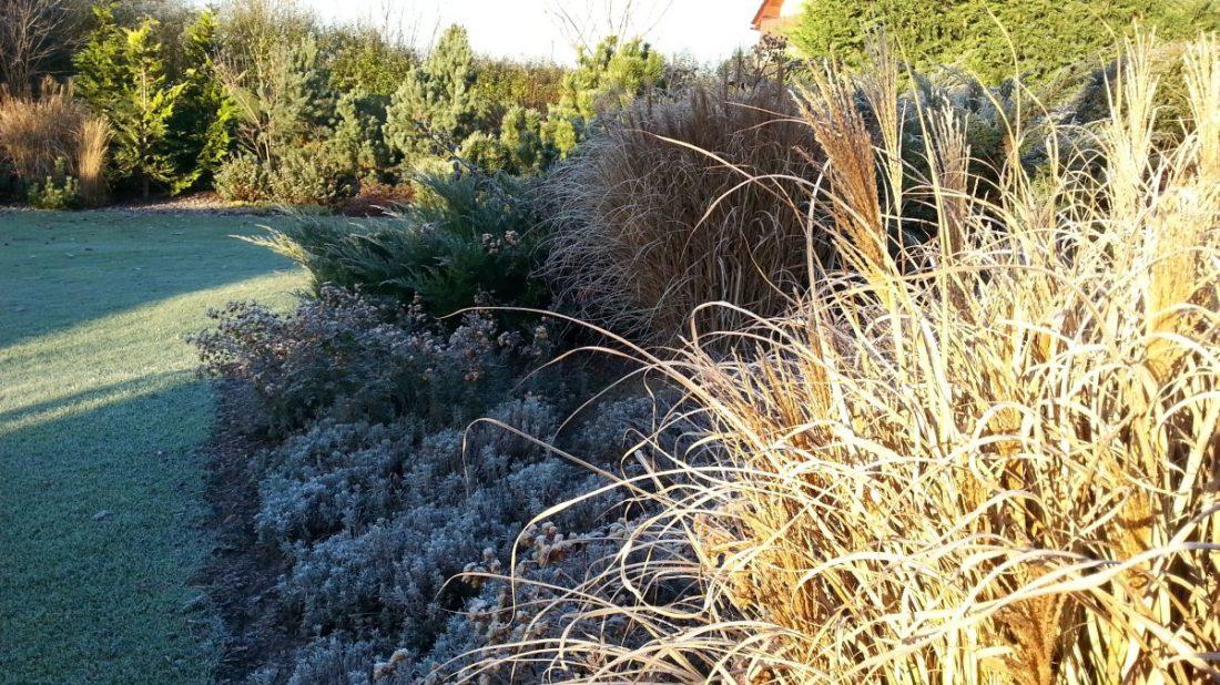 okrasne-travy-vnesou-do-zahrady-krasnou-jemnou-texturu-a-pri-prvni-namraze-se-zahali-do-stribrnych-tonu.-1100x618.jpg