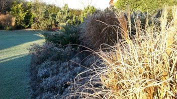okrasne-travy-vnesou-do-zahrady-krasnou-jemnou-texturu-a-pri-prvni-namraze-se-zahali-do-stribrnych-tonu.-352x198.jpg