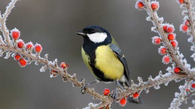 Ptákům můžete přikrmováním ublížit. Jak to dělat správně?