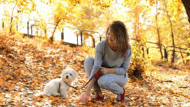 Kompostování psích výkalů: ano nebo ne?