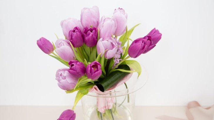 tulipan-728x409.jpg