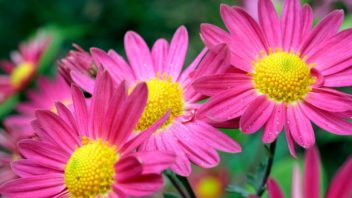 dusicky-aneb-kvetiny-jako-vzpominka-352x198.jpg