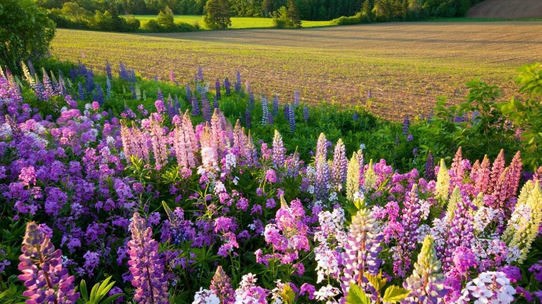 kvetiny-ve-stylu-re-create-profimedia-0282315656-1-1100x618.jpg