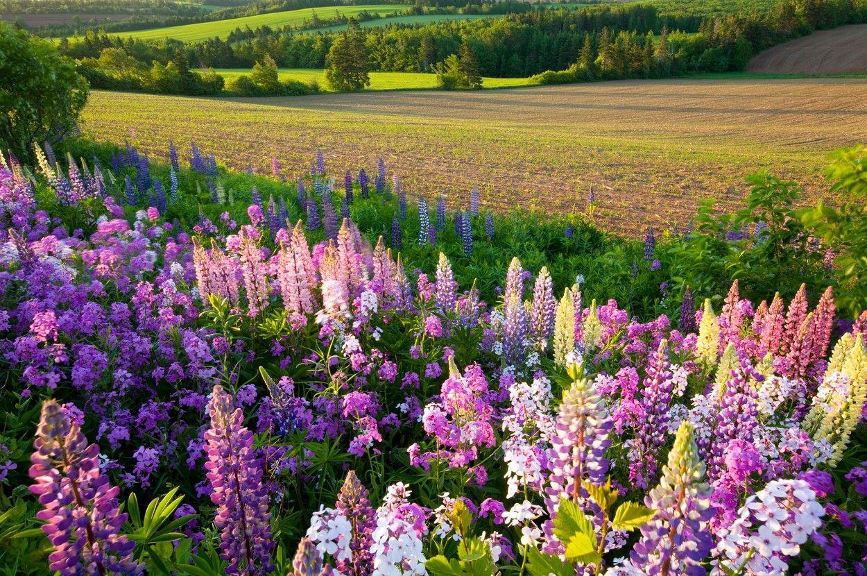 Květiny ve stylu Re-create profimedia-0282315656