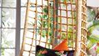 05arthouse_-amazonia-black-and-orange-cushion-144x81.jpg