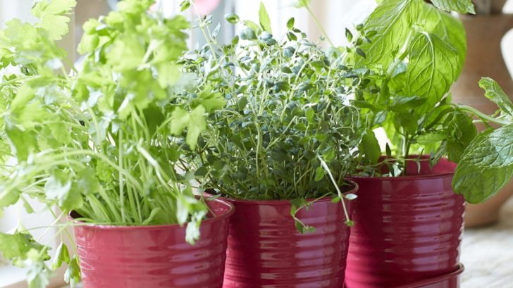 10annabel-james_raspberry-herb-pots-lifestyle-728x409.jpg