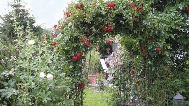 Nastal vhodný čas na sázení růží
