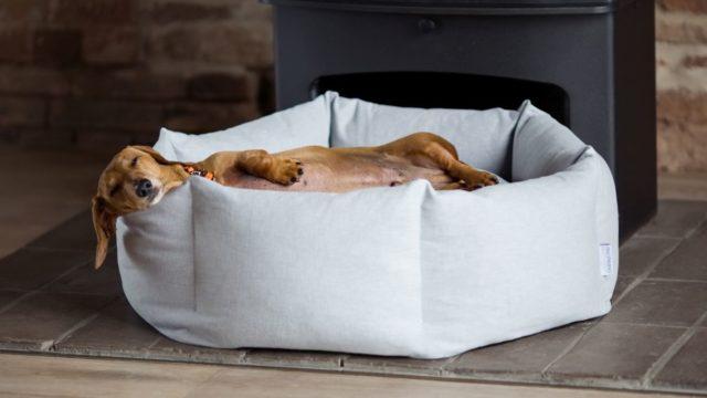 Jak vybrat pelíšek pro psa apár užitečných rad navíc
