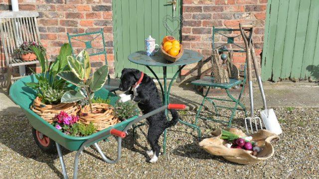 Které nářadí by vám nemělo chybět přizazimování zahrady?