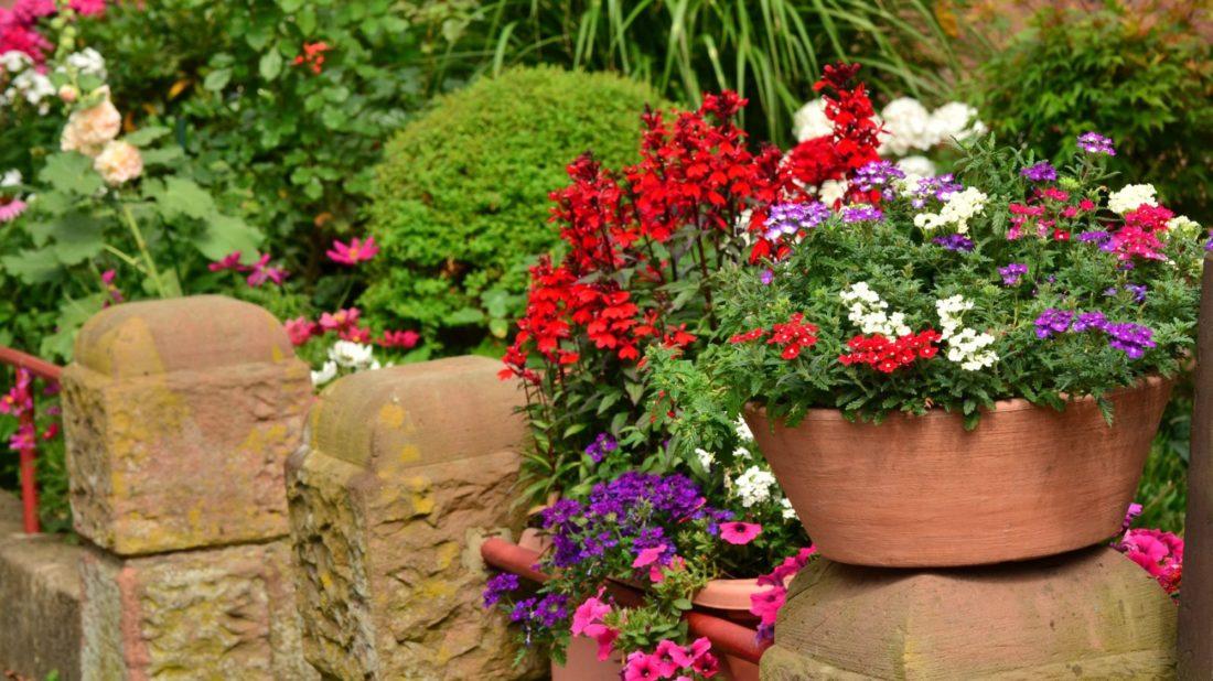 8summer-flowers-1551822-1100x618.jpg