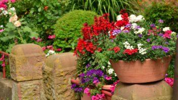 8summer-flowers-1551822-352x198.jpg