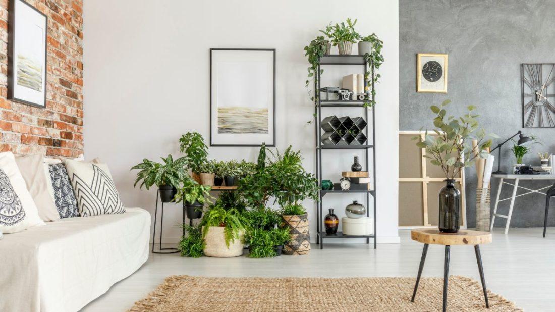 obyvaci-pokoj-s-rostlinami-1100x618.jpg