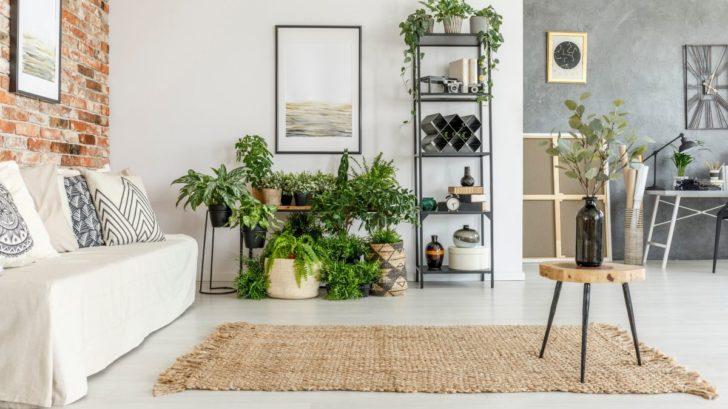 obyvaci-pokoj-s-rostlinami-728x409.jpg