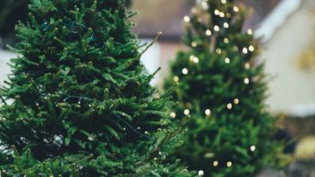 3pixabaay.com-borovice_christmas-tree-1149919-352x198.jpg