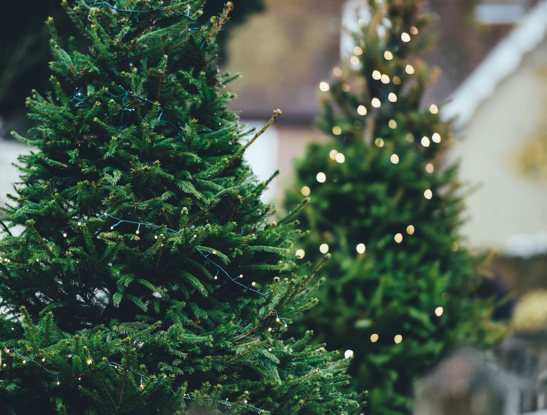 3pixabaay.com-borovice_christmas-tree-1149919.jpg