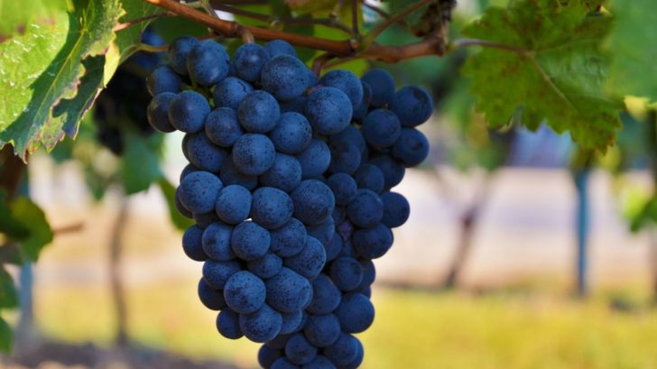 v-soucasne-dobe-mnozi-z-nas-den-sv.-martina-neslavi-do-povedomi-kazdeho-se-ale-urcite-zapsalo-svatomartinske-vino-coz-je-prvni-letosni-vino-728x409.jpg