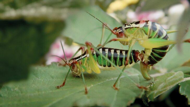 biodiverzita-v-zahrade-2-728x409.jpg