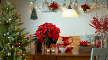 2020_poinsettia_04000_country_christmas_charm_01-352x198.jpg