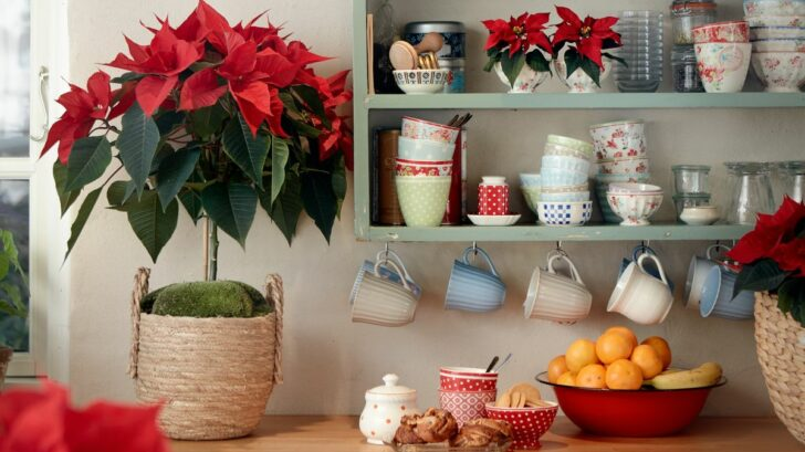 2020_poinsettia_04000_country_christmas_charm_08-728x409.jpg