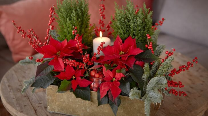 2020_poinsettia_04130_diy_gift_box_06-1-728x409.jpg