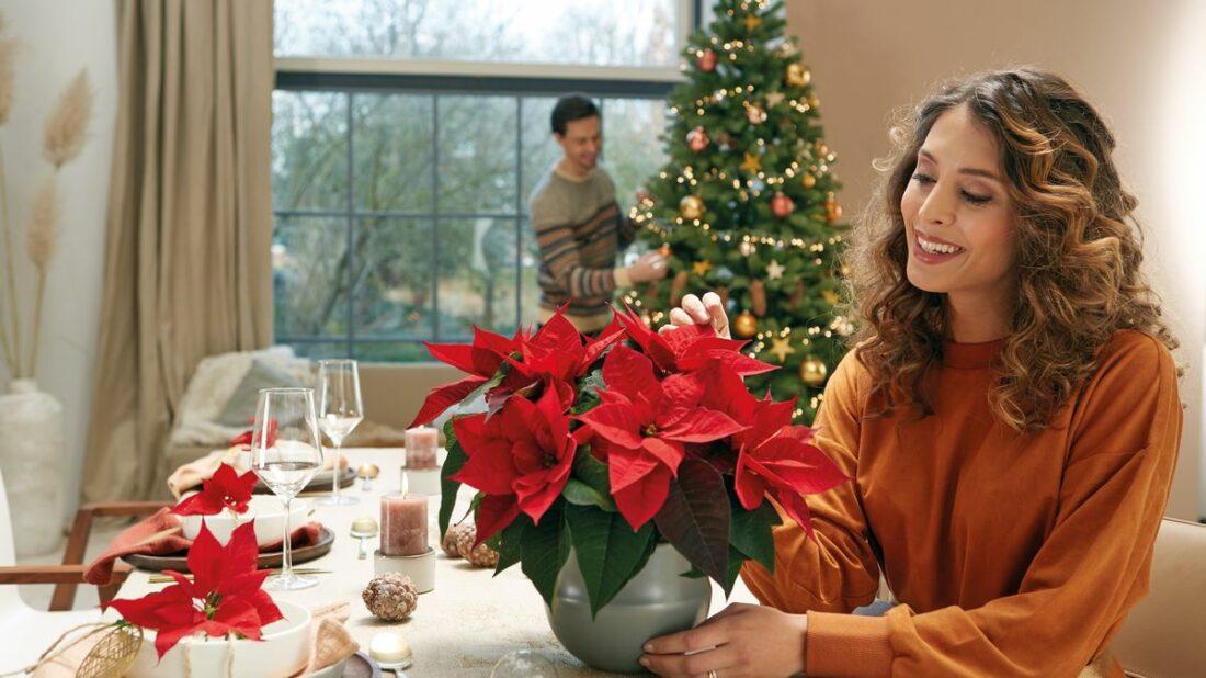 2020_poinsettia_05100_christmas_romance_02-1100x618.jpg