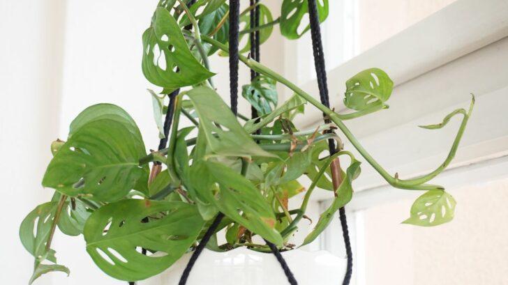 zahrada-na-niti-monstera-adansonii-390-kc_51146991464_o-728x409.jpg