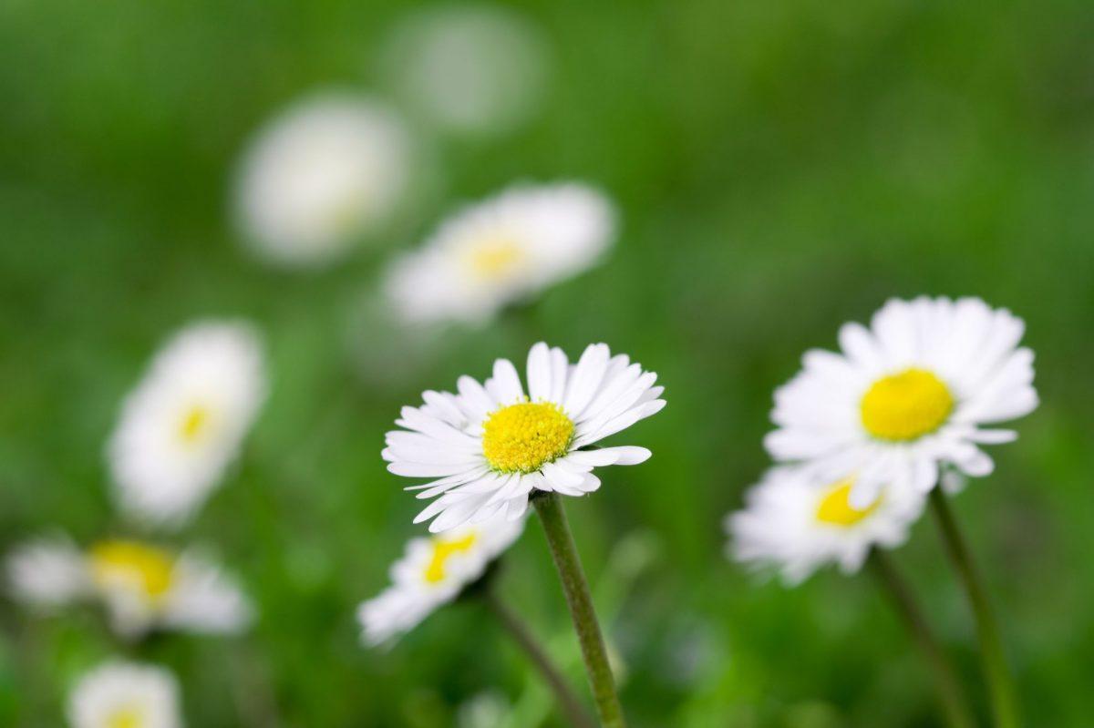 Zahrada pro alergiky – můžete ji mít ibez odborníka na biologii!