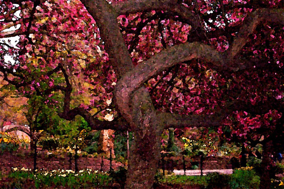 Okrasná zahrada – toužíte poní?