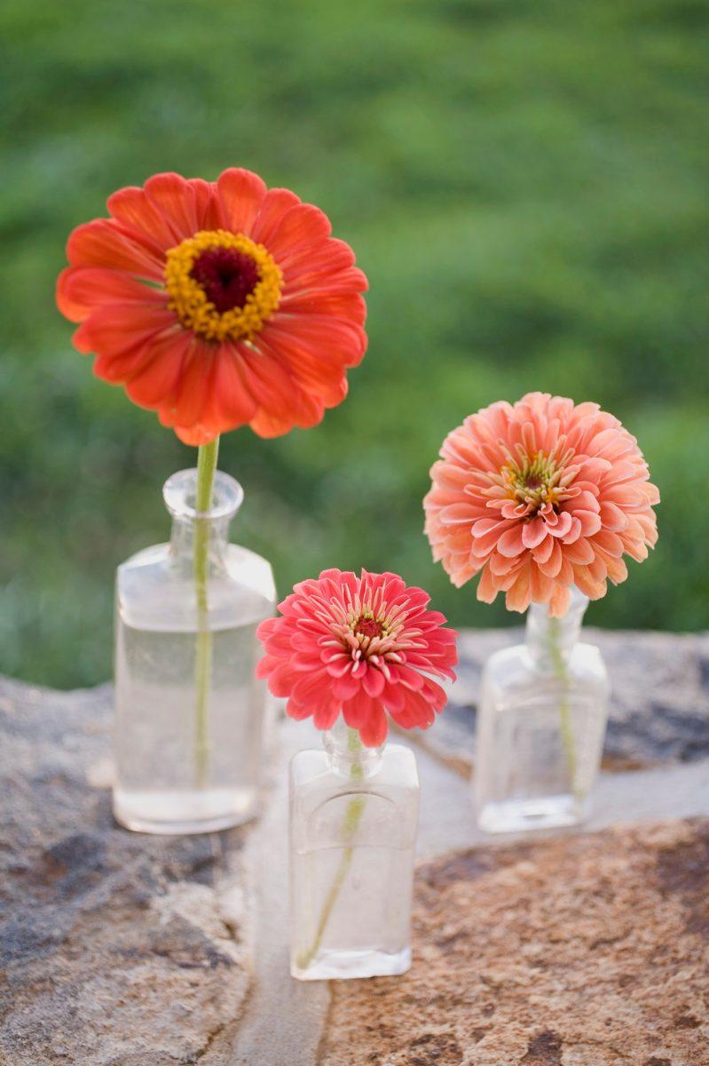 Květiny vlahvích na stěně – budete je chtít taky
